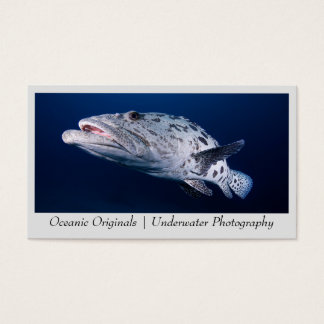 Potato Cod at the Cod Hole Business Card Template