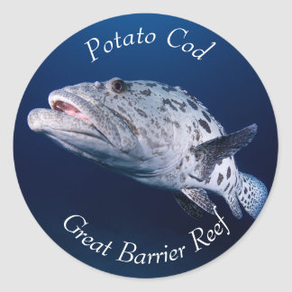 Potato Cod on the Great Barrier Reef Classic Round Sticker