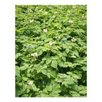 Potato field flyer