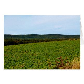 Potato Field in Westfield, Maine Card