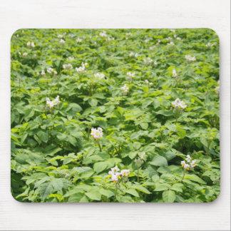 Potato field mouse pad
