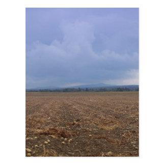 Potato Field Postcard