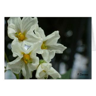 Potato flower greeting cards