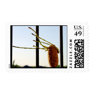 Potato Hair Blowing in the Wind Postage Stamps