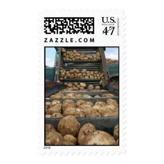Potato Harvest Stamp