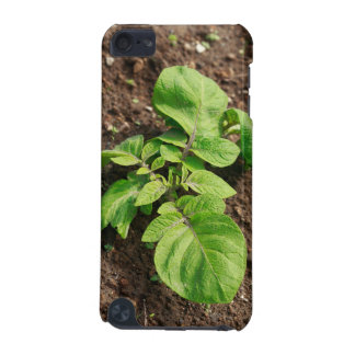 Potato plant iPod touch 5G cover