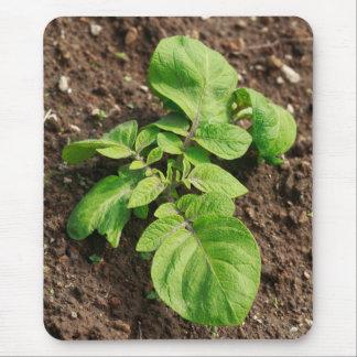 Potato plant mouse pad
