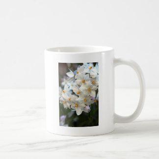 Potato Vine Coffee Mug