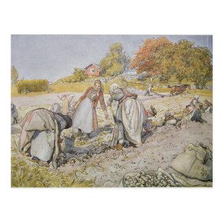 Potatoes de excavación, 1905 tarjeta postal