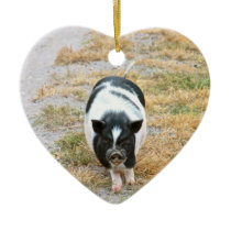 Potbelly Pig | Cute Farm Animal Photo Ceramic Ornament