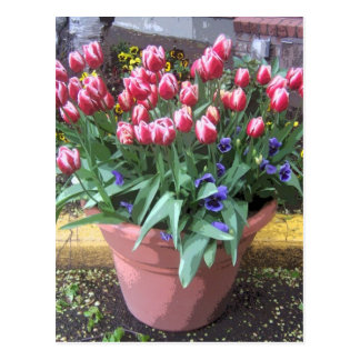 Pote de arcilla del tulipán de la primavera tarjeta postal