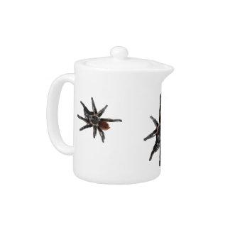 pote del té de la araña del tarantula de tres masc