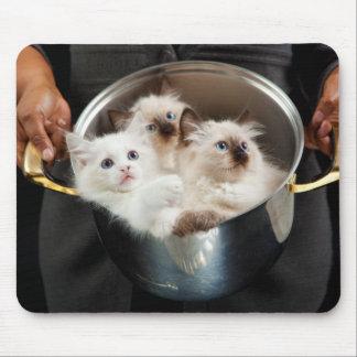 Pote por completo de gatitos tapetes de ratones