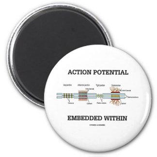 Potencial de acción encajado dentro (empalmes de imán de frigorífico