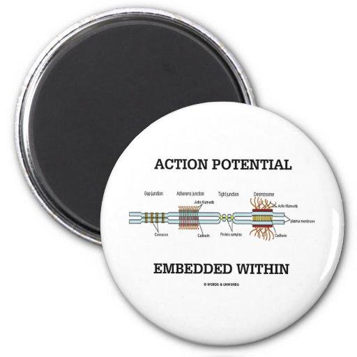 Potencial de acción encajado dentro (empalmes de imán redondo 5 cm