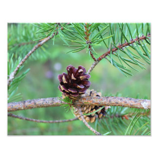 Potential For Growth Photographic Print