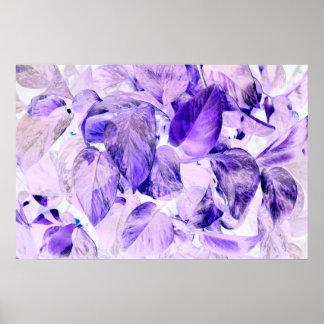 pothos inverted plant blue purple poster
