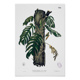 POTHOS? PINATA Botanical Tropical Leaf Poster