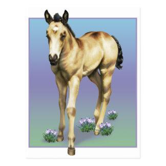Potra cuarta del caballo de la lluvia tarjeta postal