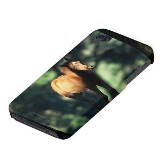 Potro árabe en los árboles iPhone 4/4S carcasas