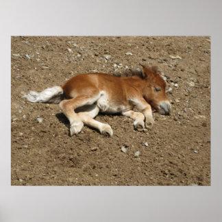 Potro - caballo del bebé póster