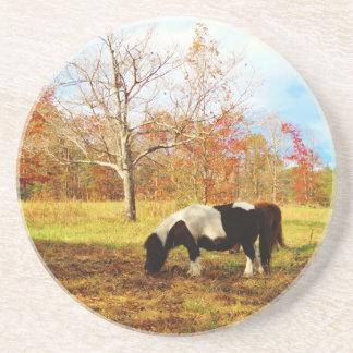 Potro caballo miniatura blancos y negros posavasos cerveza