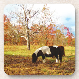 Potro caballo miniatura blancos y negros posavasos de bebida