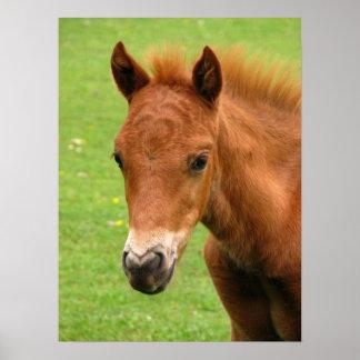 Potro de Chesnut, impresión del caballo del bebé,