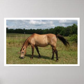 Potro de Connemara del Dun, caballo, pastando en p Póster