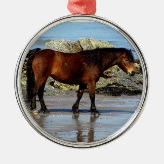 Potro de Dartmoor en la playa alejada en Devon del Ornamento De Reyes Magos