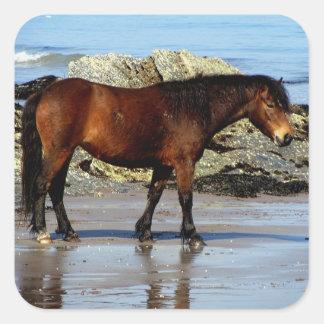 Potro de Dartmoor en la playa alejada en Devon del Pegatina Cuadradas