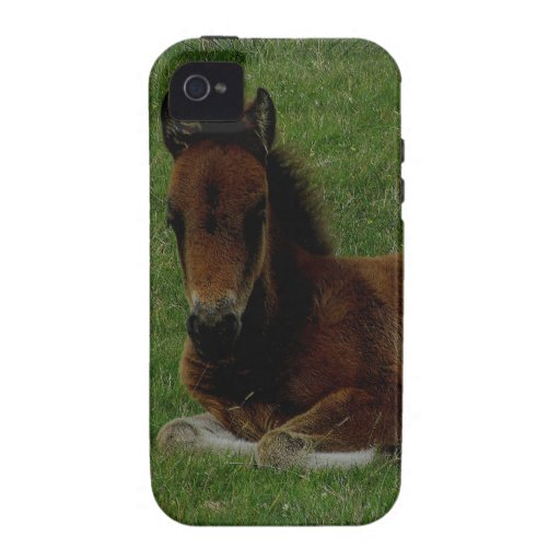 Potro de Dartmoor que descansa (2) iPhone 4/4S Carcasa