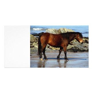 Potro de Daxrtmoor en la playa alejada en Devon de Tarjeta Fotografica Personalizada