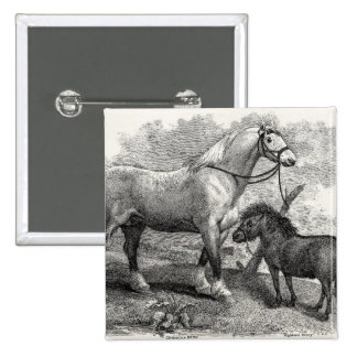 Potro de la montaña del caballo de Clydesdale de l Pin