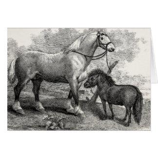 Potro de la montaña del caballo de Clydesdale de Tarjeta De Felicitación