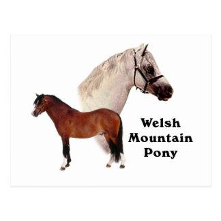 Potro de la montaña Galés Postal