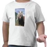 Potro de Reino Unido, Escocia, Islas Shetland, She Camisetas