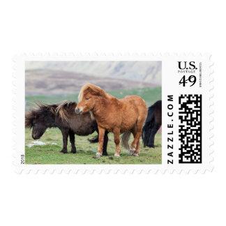 Potro de Shetland Islas Shetland Escocia 2 Sellos