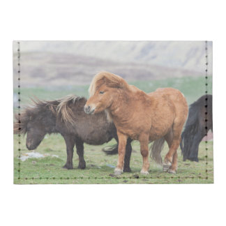 Potro de Shetland Islas Shetland Escocia 2 Tarjeteros Tyvek®