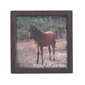 Potro del caballo salvaje - caja secreta caja de joyas de calidad