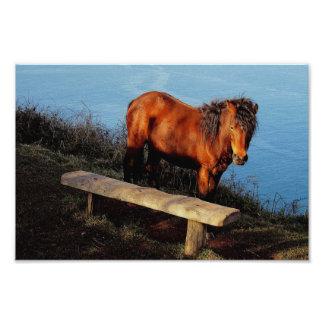 Potro del sur de Dartmoor de la costa de Devon cer Fotografías