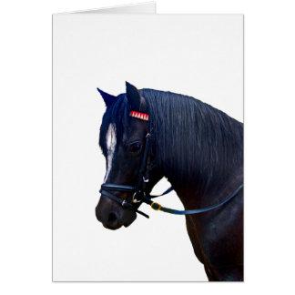 Potro galés negro withbridle. tarjeta de felicitación