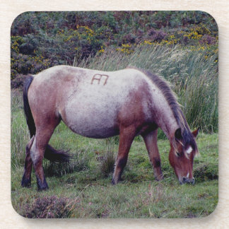 Potro Grazeing Autunm temprano de Dartmoor Posavasos De Bebida