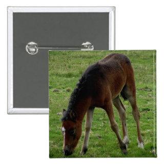 Potro Grazeing del potro de Dartmoor en el amarrar Pins