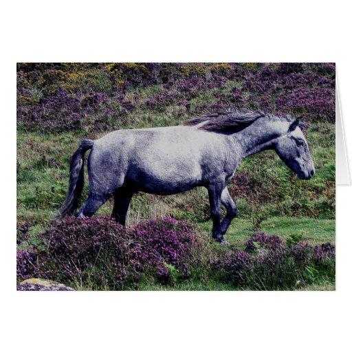 Potro gris de Dartmoor que vaga por en el brezo Tarjeta De Felicitación