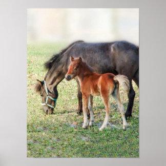 Potro miniatura del caballo - potro y potra modifi póster