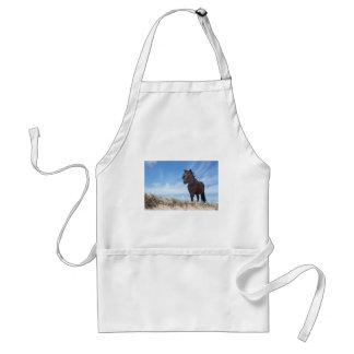 Potro negro en la arena con el cielo azul delantal