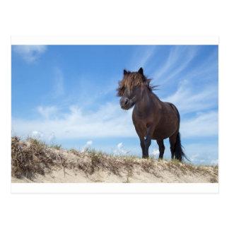 Potro negro en la arena con el cielo azul tarjetas postales