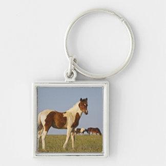 Potro salvaje del caballus del Equus del caballo)  Llavero