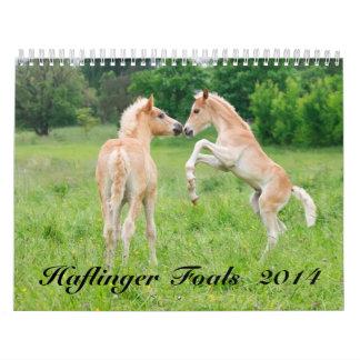 Potros 2014 de Haflinger Calendarios